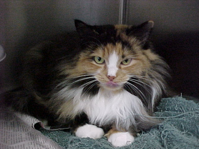 East Coast Maine Coon Rescue | K12 Academics