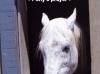 SpiritAcresFarm Equine Rescue and Sanctuary