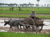 Travellers Worldwide: Cambodia