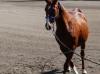 Fox Horsemanship