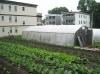 Victory Programs ReVision Urban Farm